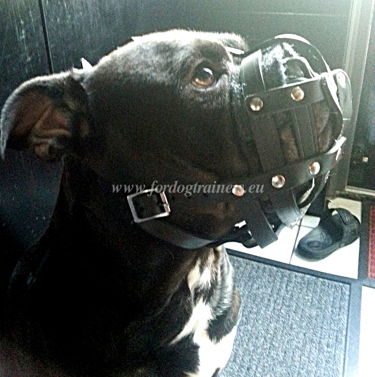 Best padded leather dog muzzle for All Mastiffs