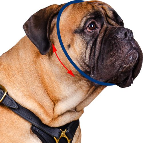 mesurer chien pour le collier