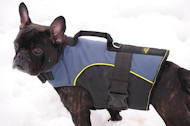 Outdoor nylon dog traking harness for French Bulldog
