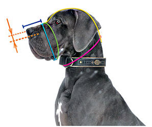 How to size your
