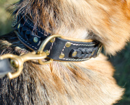 Nappa Padded Leather Collar for Belgian Malinois