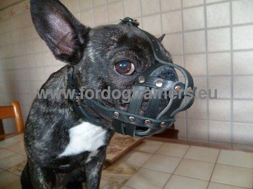 Muzzle for French Bulldog