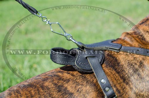 Boxer Professional Training Harness