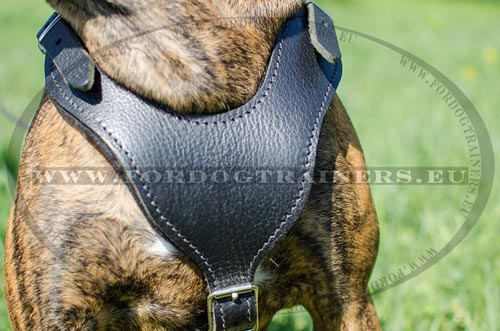 Agitation Harness for Boxer