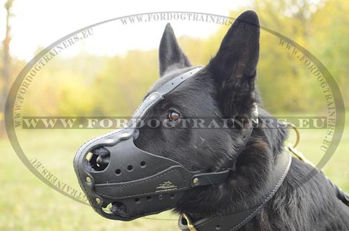Padde dog muzzle exclusive quality and strength