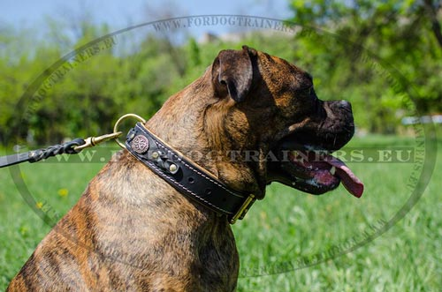 Excellent padded collar on Boxer
