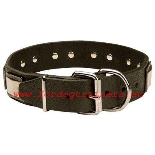 Solid welded furniture of the Royal Style collar for German Shepherd