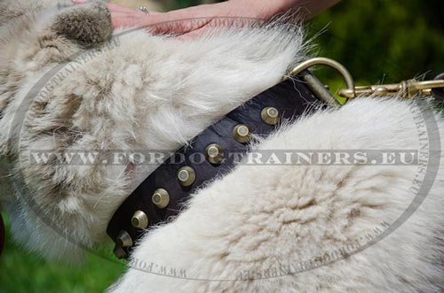 Leather Collar for Husky