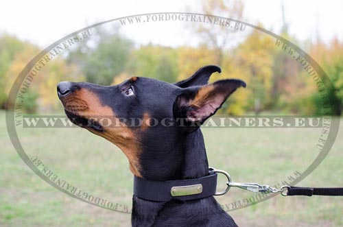 Easily washed nylon dog collar for active Doberman