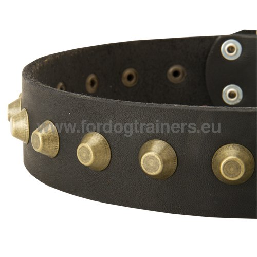 Exclusive Collar for Husky