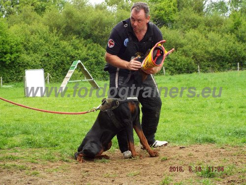 Schutzhund Training Bite