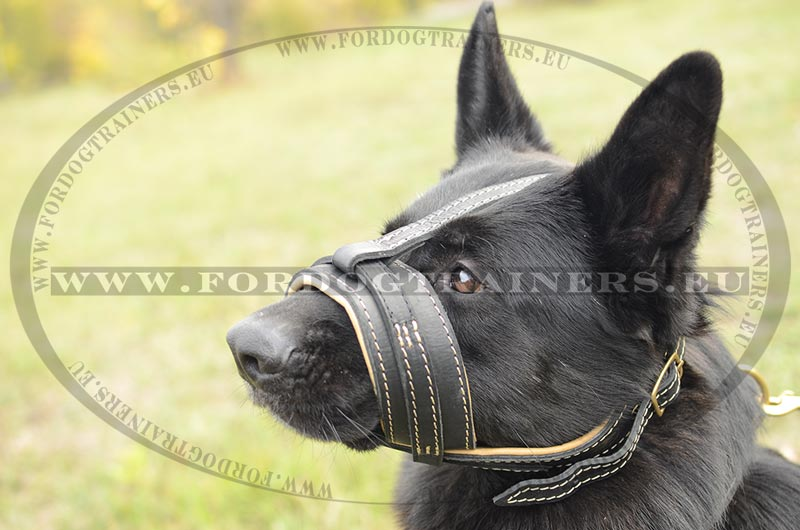how to use a halti dog harness