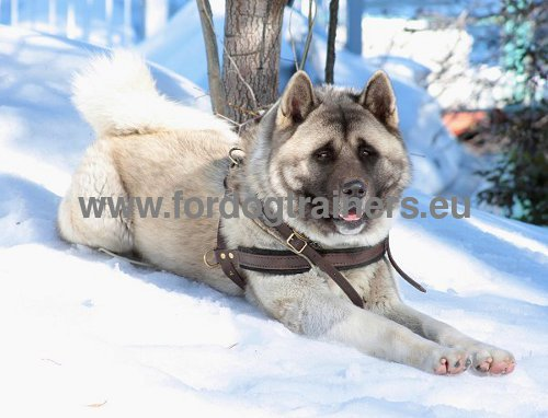 Leather Harness Practical Multifunctional for Husky and Akita