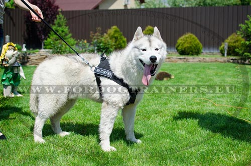 Solid Dog Harness for Husky Education