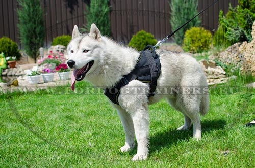 Perfect Nylon Harness for Husky,