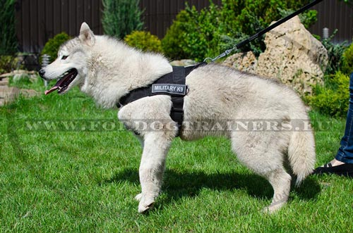 Nylon Dog Harness with Front Lead Attachment for Husky