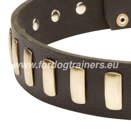 Excellent Large Dog Collar