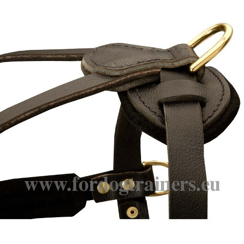 Akita Reliable Leather Harness with Solid Hardware