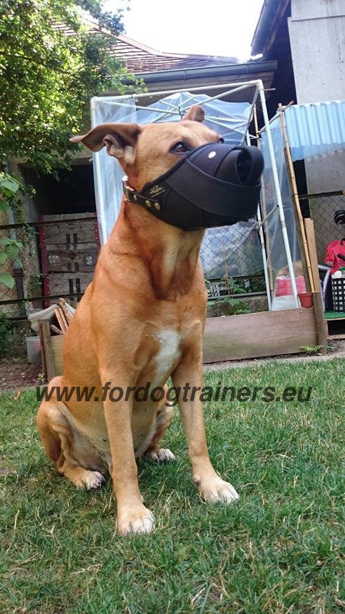 Protective Dog Muzzle for Amstaff