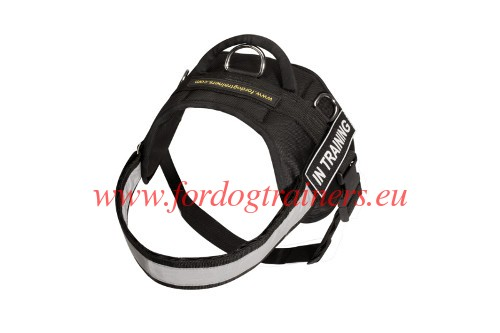 Dog Harness Perfect for Wet Weather