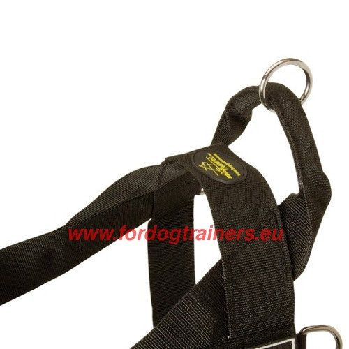 Resistant Straps of Dog