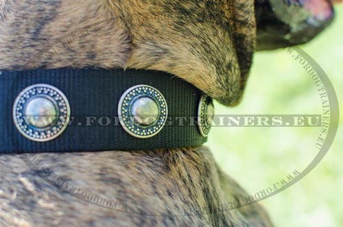 Circles of the Boxer walking collar