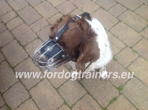 Wire Basket Muzzle for Springer Spaniel