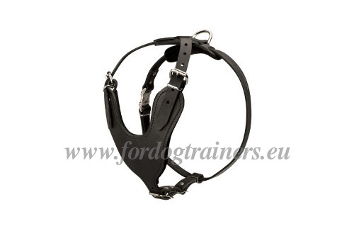 Husky Training Harness