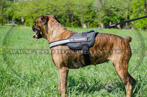 Boxer Harness with Patches