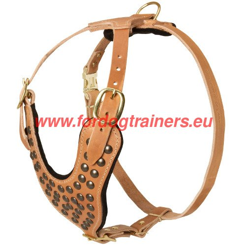 Studded dog harness for Pitbull - hand crafted and hand