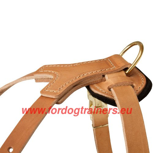 Hand stitched straps of the studded harness for Pit Bull