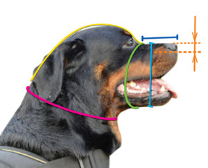 How to size a dog for fit muzzle