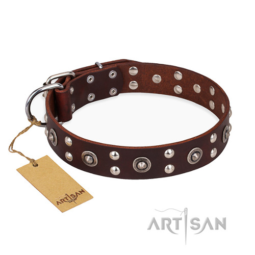 "Handcrafted Brown Dog Collar ""Pirate Treasure"" FDT Artisan"