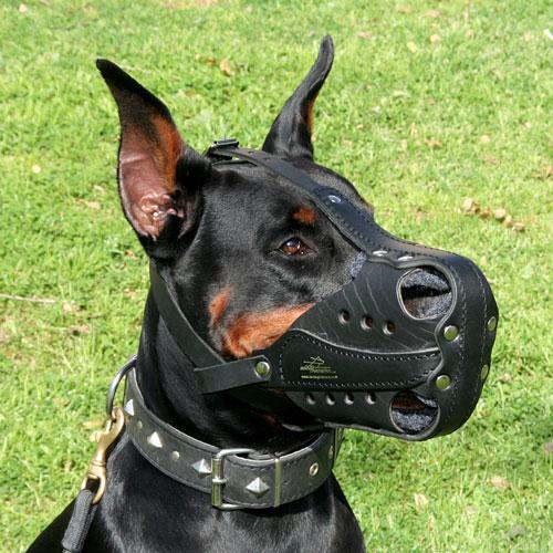 Muselière de Frappe : Dog harness, Dog muzzle, Dog collar