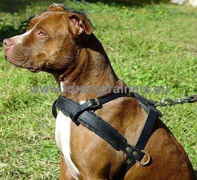 Pitbull Tracking And Pulling Leather Harness H5 1057 Pettorina Speciale Da Traino Per Pitbull Dog Harness Dog Muzzle Dog Collar Dog Leash Bite Sleeves