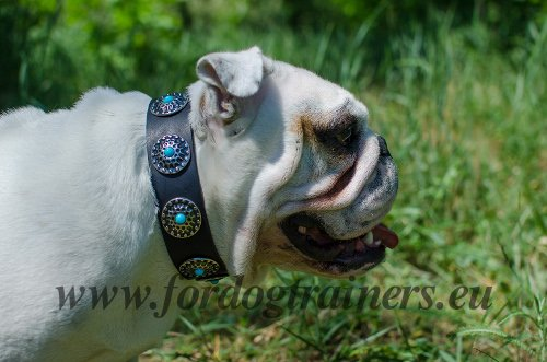 English Bulldog Tan Leather Dog Collar with Blue Stones - Click Image to Close