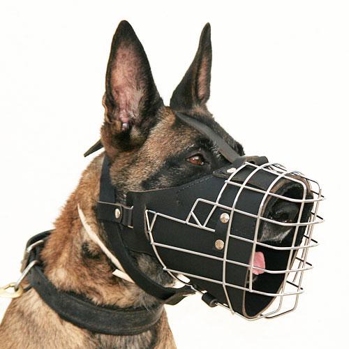 Utilisation de la Muselière : Dog harness, Dog muzzle, Dog