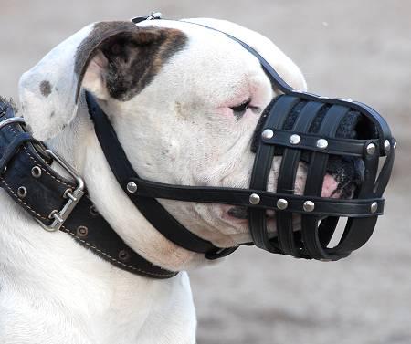 Bozal de cuero para perros