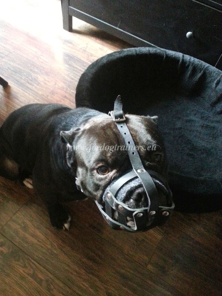 Best padded leather dog muzzle Bulldog