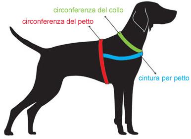 addestramento cani da tartufo perugia italy - photo#47