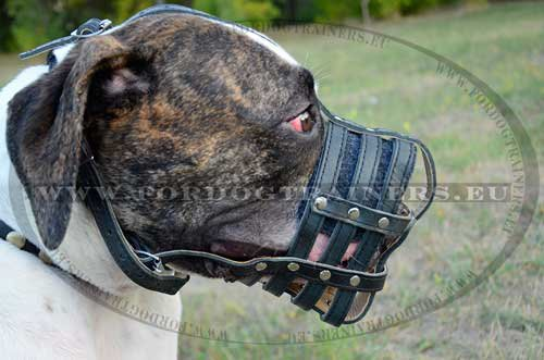 Durable Muzzle for American Bulldog