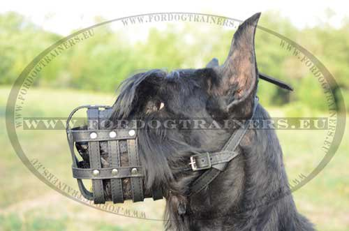 Simple Lightweight Muzzle for Riesenschnauzer