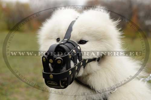 Leather Muzzle for Samoyed
