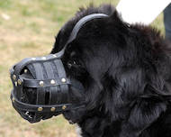 Newfoundland Everyday Light Weight Ventilation Dog muzzle