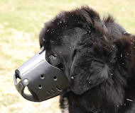 Newfoundland Everyday Leather dog muzzle M51