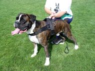 Boxer Nylon multi-purpose dog harness for tracking/pulling H6