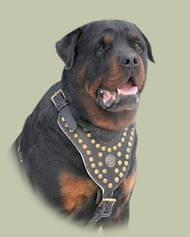 Royal Dog Studded Leather Harness H11 for Rottweiler